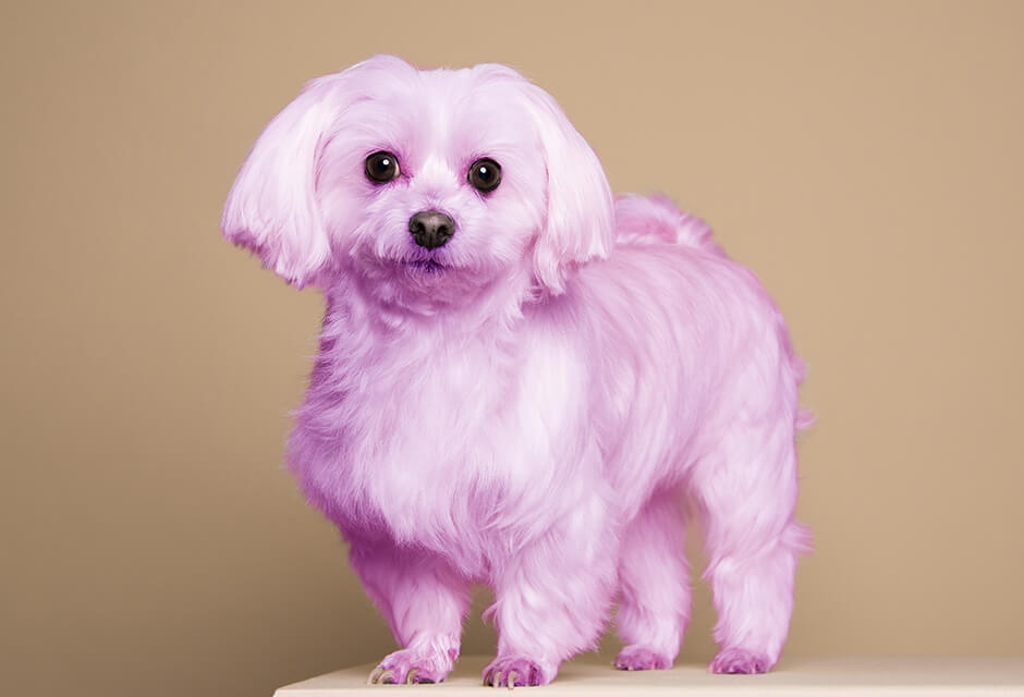 Photo Example after the use of Pet hair color Retouching Feature